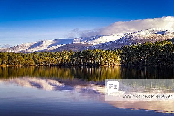 Vereinigtes Königreich  Schottland  Highlands  Cairngorms-Nationalpark  Loch an Eilean  Winter