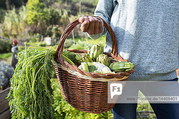 Frau steht auf dem Feld und trägt eine Gemüsekiste