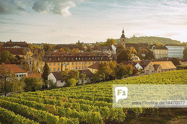 Deutschland  Bayern  Bamberg  Weinberg und Stadtbild