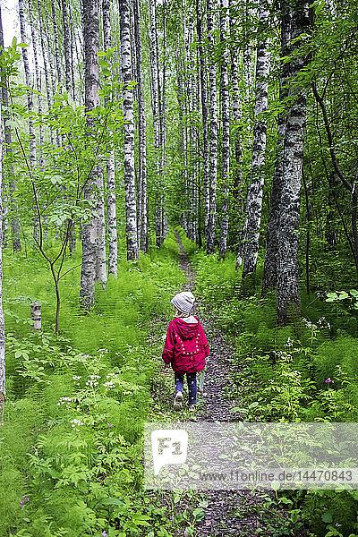 Finnland  Kuopio  Mädchen geht in einem Birkenwald