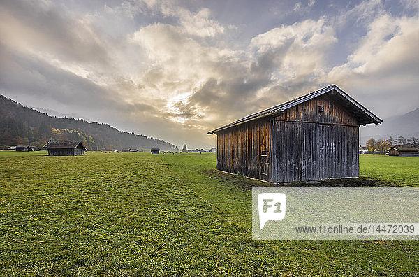 Deutschland  Bayern  Garmisch-Partenkirchen  Wiese im Herbst