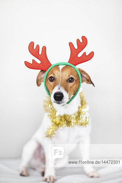 Bildnis eines Hundes mit Stirnband aus Rentiergeweih und goldener Girlande