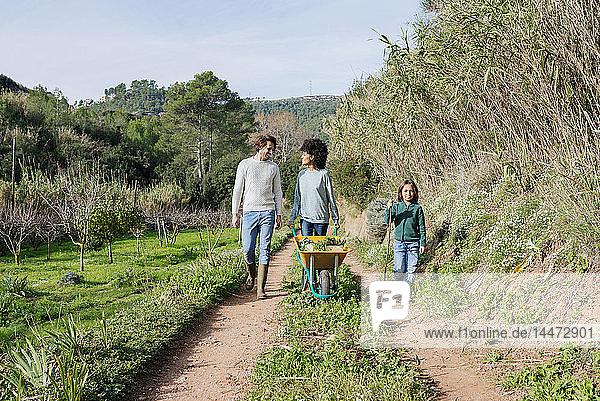 Family walking on a dirt track  pushing wheelbarrow  full of fresh vegetables