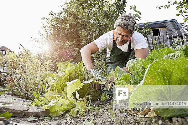 Reifer Mann steht in seinem Garten und trägt eine Schürze