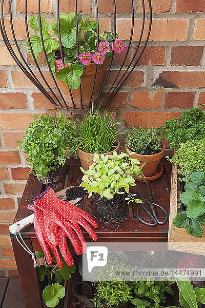 Verschiedene Topfgewürzpflanzen auf der Terrasse