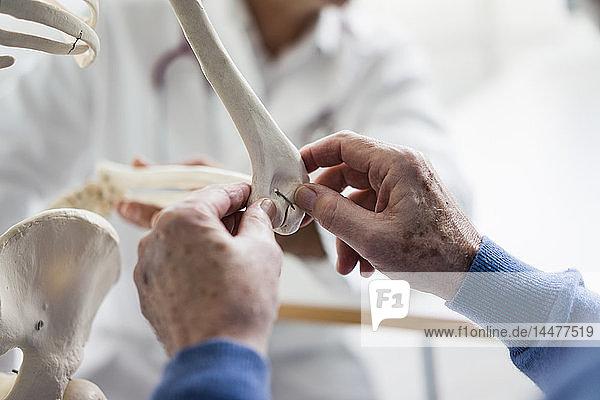 Nahaufnahme eines Patienten  der ein anatomisches Modell in der medizinischen Praxis untersucht