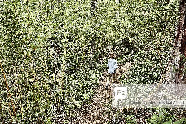 Chile  Puren  Nahuelbuta National Park  boy walking on path through forest