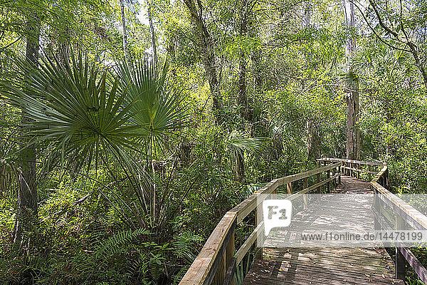 USA  Florida  Copeland  Fakahatchee Strand Preserve State Park  Uferpromenade durch Sumpf
