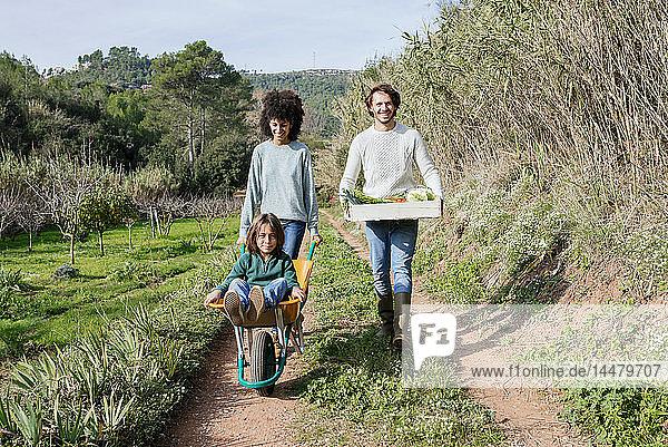 Familie geht auf einem Feldweg  schiebt Schubkarre  trägt Kiste mit Gemüse