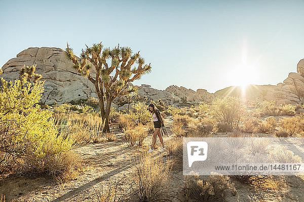 USA  Kalifornien  Los Angeles  Frau beim Spaziergang im Joshua-Tree-Nationalpark im Gegenlicht