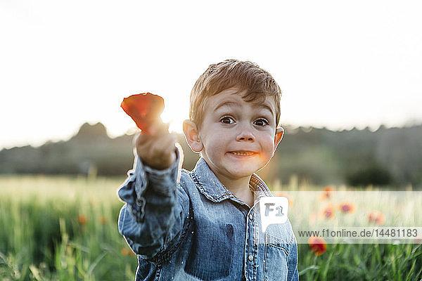 Junge auf einem Mohnfeld im Frühling  der Mohn hält