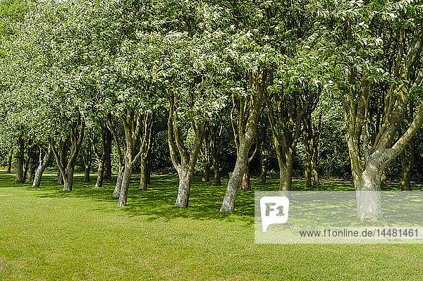 Dänemark  Jütland  Sonderborg  Bäume in einem Park