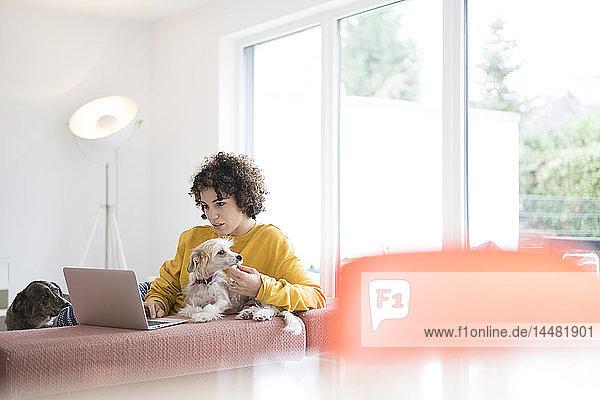 Frau mit Hunden mit Laptop zu Hause