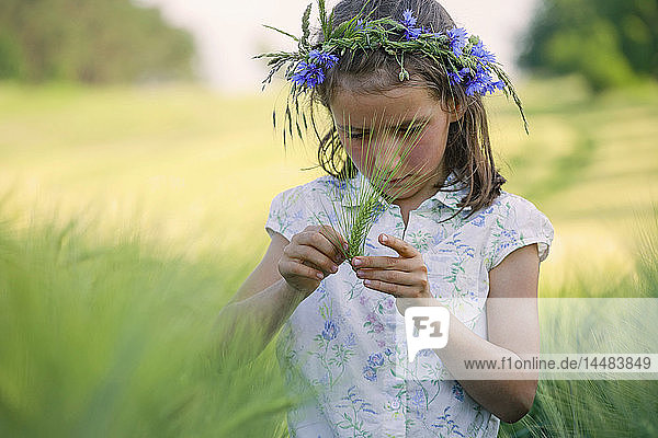 Curious girl with flowers in hair examining green wheat stalk in rural field
