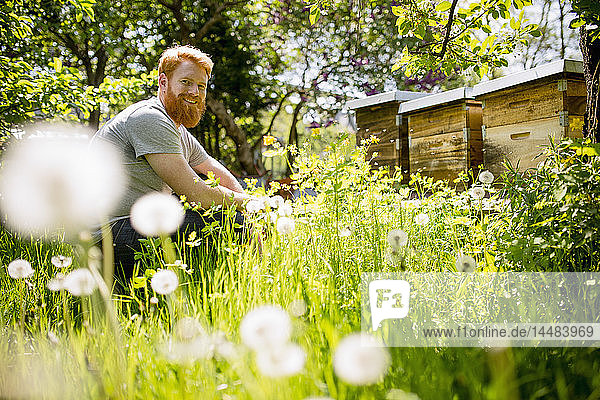 Portrait happy man with beard gardening in sunny garden