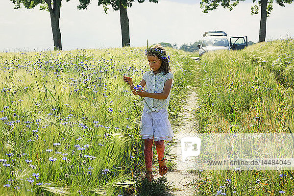 Girl picking purple wildflowers in sunny  idyllic rural field