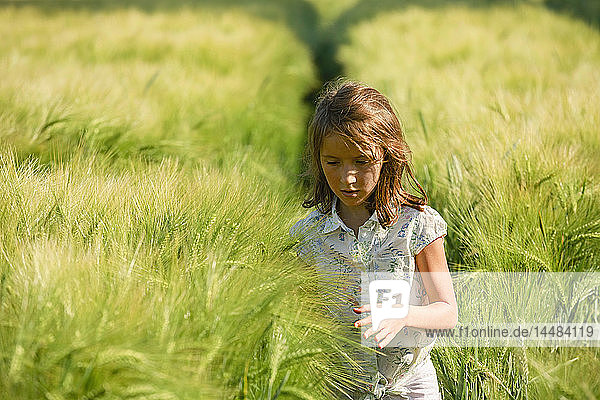 Curious girl walking in sunny  idyllic rural green wheat field