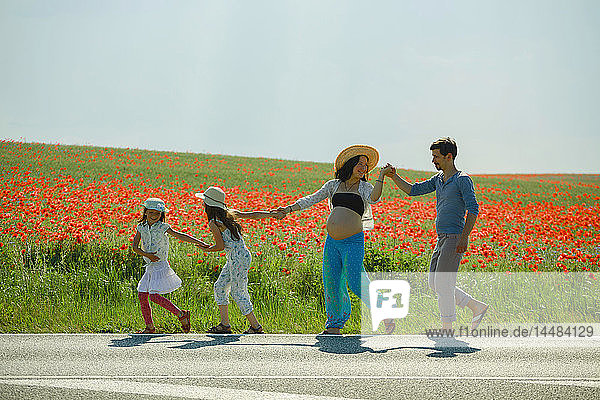 Happy pregnant family holding hands  walking along sunny rural red poppy field
