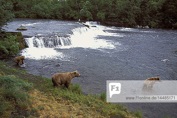 Sow and Two Cubs at Brooks Falls Western Alaska