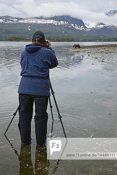 Female photographer with tripod photographs a grizzly digging for clams at Amalik Bay on the Katmai National Park coast  Alaska