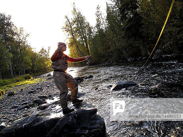 Woman fly fishing for Rainbow trout on the Russian River  Kenai Peninsula  Southcentral Alaska  Autumn