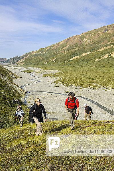 Group of hikers travel up a ridge into the Alaska Range above Thorofare River  Denali National Park  Interior Alaska  Summer/n