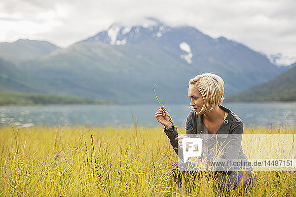 Woman examines marsh grasses by Eklutna Lake  Southcentral Alaska