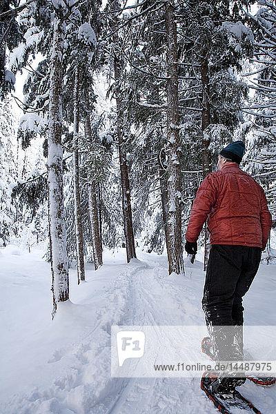 Man snowshoeing on Winner Creek trail amongst a Hemlock forest in Girdwood  Southcentral Alaska during Winter