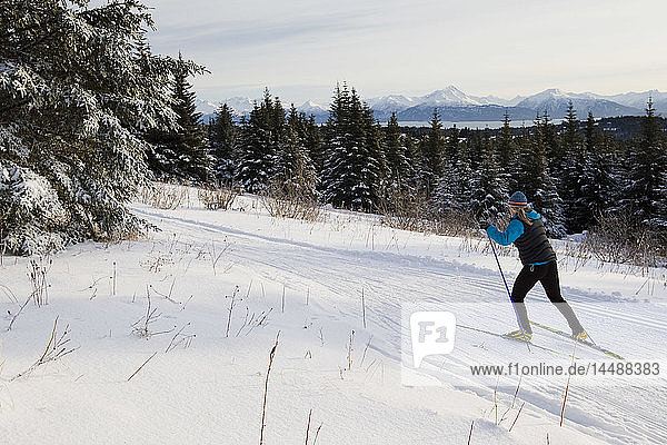 Woman Nordic skiing on the Baycrest Ski Trails in winter near Homer  Kenai Peninsula  Southcentral Alaska