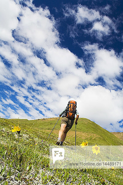 Woman hiking on tundra with view of blue sky and white clouds Denali National Park Interior Alaska summer