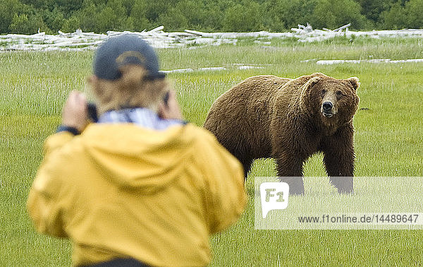 Tourist photographing a brown bear in Hallo Bay  Katmai National Park  Southwest Alaska