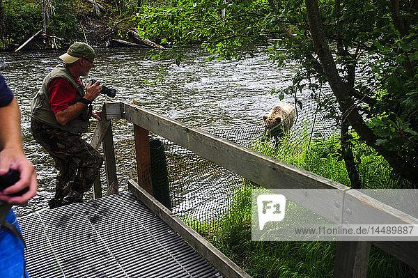 Photographers taking pictures of a brown bear on the Russian River  Kenai Peninsula  Alaska