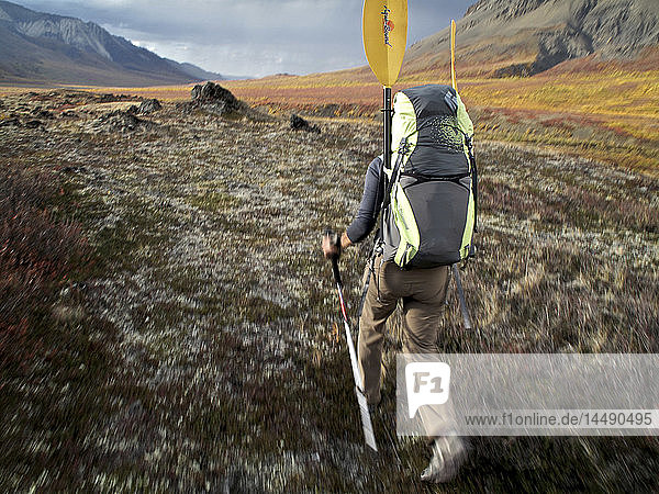 Female backpacker with a packraft hikes along the trail to the headwaters of Sanctuary River  Interior Alaska  Autumn