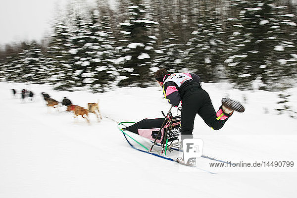Musher Ed Wood and sled dogs in the Fur Rendezvous World Sled Dog Championships on the Campbell Creek Trail in Anchorage  Alaska. Southcentral. Afternoon.