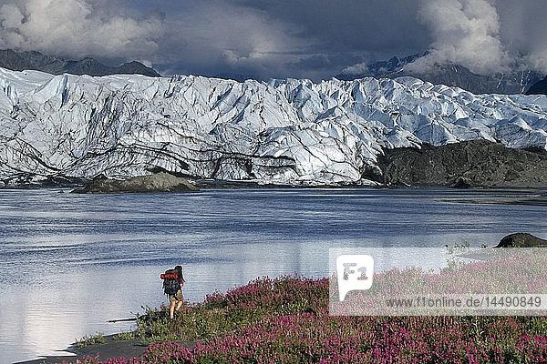 Woman Hiking Matanuska River & Glacier Summer Southcentral Alaska Chugach Mountains Fireweed