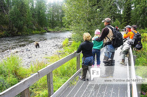 Fishermen stop along the boardwalk to photograph a Brown Bear fishing for salmon on the Russian River  Kenai Peninsula  Alaska
