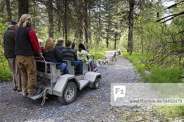 Tourists take a ride through the forest with Iditarod sled dogs using a summer training cart at Seavey´s Ididaride Sled Dog Tour in Seward  Alaska