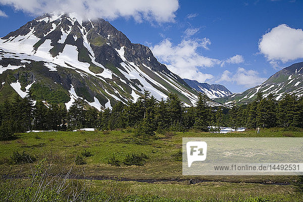 Woman hiking in meadow of wildflowers with Mt. Resurrection in background along Lost Lake Trail near Seward  Alaska during Summer