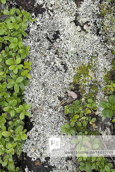 Moss growing through leaves