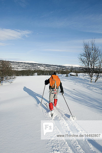 One man skiing  rear view