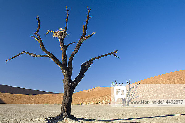 Bare dead tree on desert