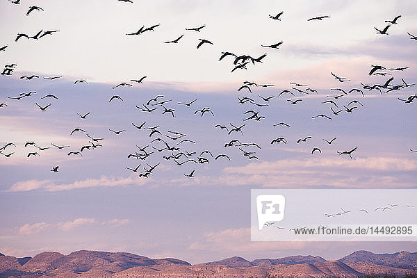 Birds flying over river