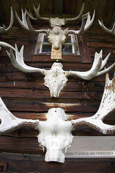 Taxidermy of deer head on wall