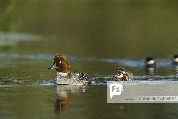 Reflection of birds on lake
