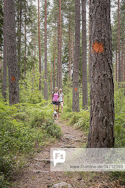 Teenage girls waling through forest