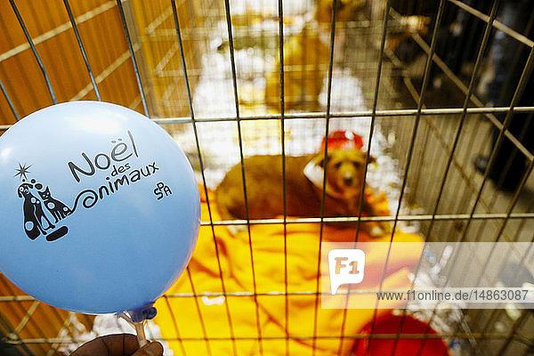 Dog adoption. Animal protection organisation.