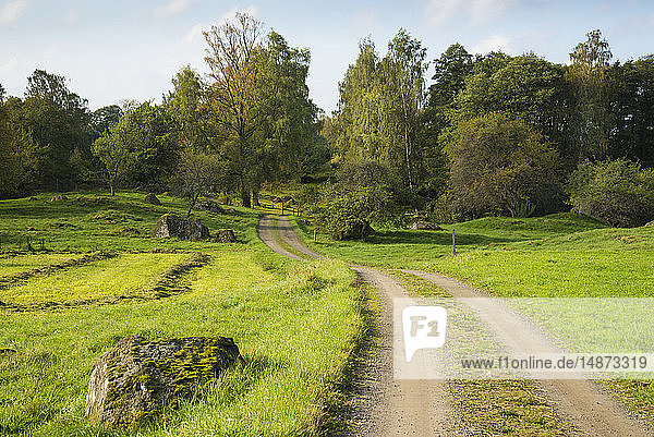 Country road leading towards forest