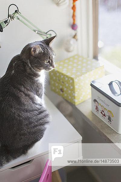 Cat sitting on desk