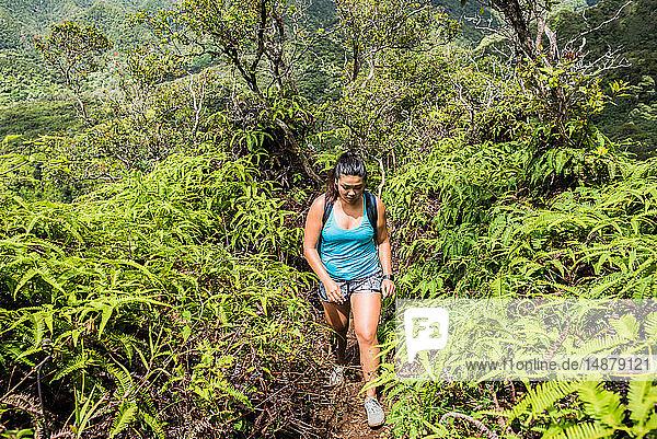 Wandern im Regenwald  Iao Valley  Maui  Hawaii