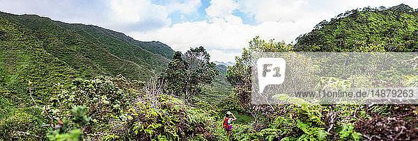 Wandern im Regenwald  Moanalua Valley Trail  Oahu  Hawaii